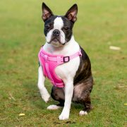 Long Paws Comfort Collection - Harness 1