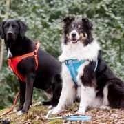 Long Paws Comfort Collection - Harness & Lead 1